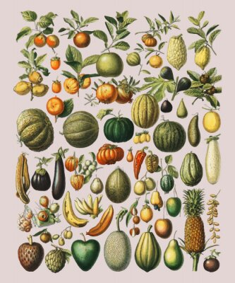 Affisch A vintage illustration of a wide variety of fruits and vegetables from the book, Nouveau Larousse Illustre (1898), by Larousse, Pierre, Augé and Claude, Digitally enhanced by rawpixel.