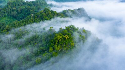 Affisch Aerial view of morning mist at tropical rainforest mountain, background of forest and mist, Aerial top view background forest.