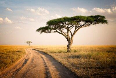 Affisch Afrikanska landskapet - Tanzania