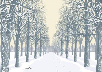 Affisch Alley med snöiga träd silhuetter i en park