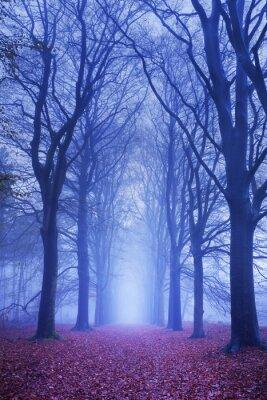 Affisch Bana i en mörk och dimmig skog i Nederländerna