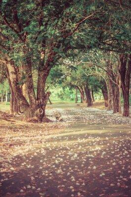 Affisch Bana under trädet-tunnel med blommor i vintage atmosfär