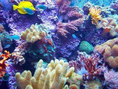 Affisch Barriera Corallina 2
