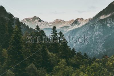 Affisch Barrträd och berg Landskap Resor fridfullt landskap sommargrönt