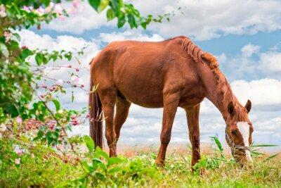 Affisch Betande brun häst på grönbete med en vacker natur