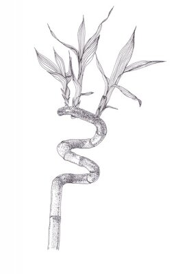 Affisch Black ink dots drawing sketch of bamboo branch isolated on white background. Hand drawn illustration of beautiful bamboo brunch spiral with leaves.