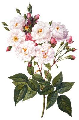 Affisch blomma illustration