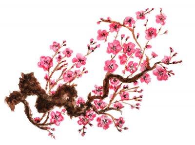 Affisch Blommande gren av sakura. Isolerad på vit bakgrund