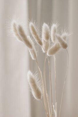 Affisch Close-up of beautiful creamy dry grass bouquet. Bunny tail, Lagurus ovatus plant against soft blurred beige curtain background. Selective focus. Floral home decoration. Vertical.