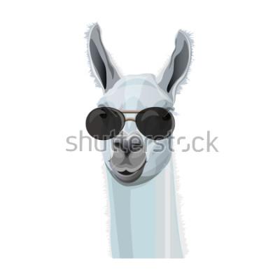 Affisch Comic porträtt av llama i svarta glasögon. Vektor illustration isolerad på vit bakgrund