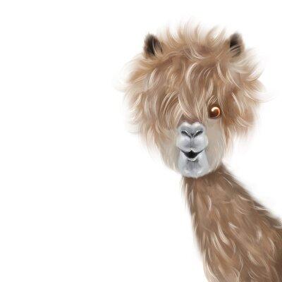 Affisch Cute lama portrait hand painting illustration