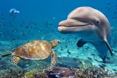 Affisch delfin och sköldpadda undervattens- på revet
