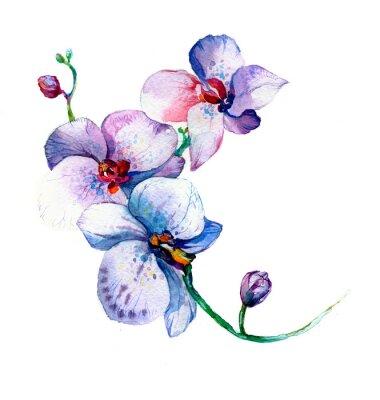 Affisch den nya syn på orkidé akvarell handritad för vykort isolerad på den vita bakgrunden
