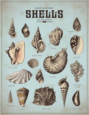 Affisch djurlivet illustrationer: skal (1)