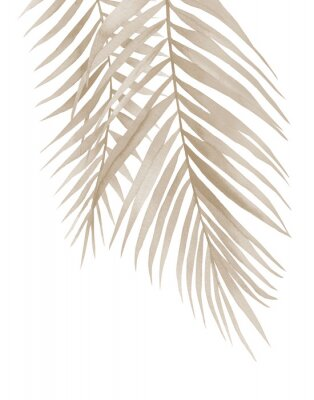 Affisch Dried palm branches. Pastel beige leaves. .Watercolour illustration isolated on white background.