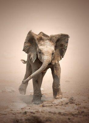 Affisch Elefant Calf mock laddning