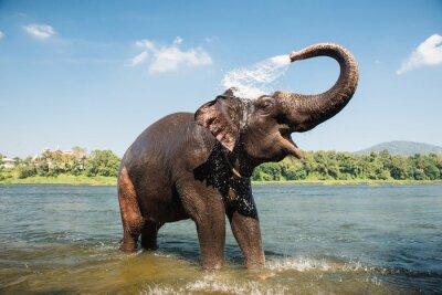 Affisch Elefant tvätt i floden