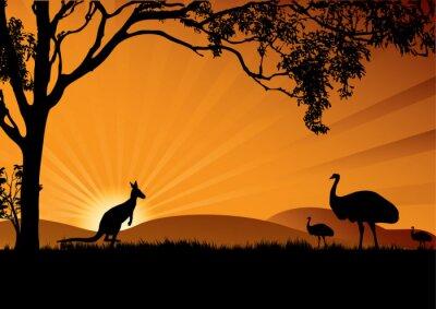 Affisch emu känguru solnedgång