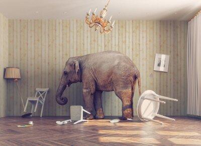 Affisch en elefant i ett rum