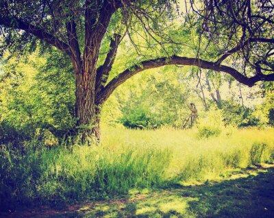 Affisch en skog eller park med träd med höstlöv gjort med en retr