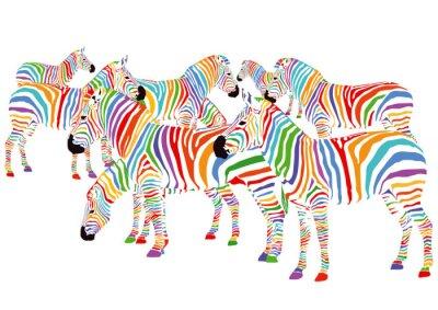 Affisch Farbenfrohe Zebror