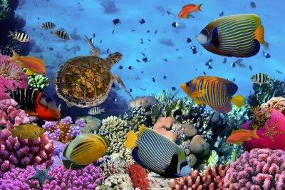 Affisch färgrik korallrev med många fiskar