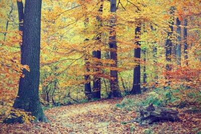 Affisch Färgstarka hösten träd i skogen, vintagelook
