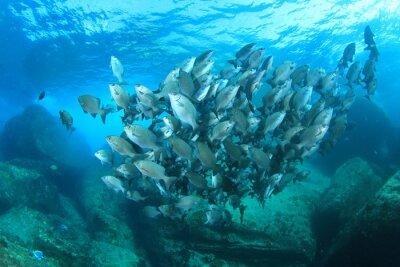 Affisch Fiskstim på undervattens korallrev i hav