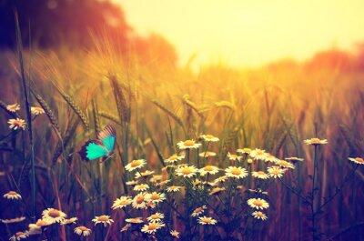 Affisch Fjäril flygande våren äng daisy blommor