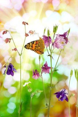 Affisch fjäril och blommor i trädgården närbild