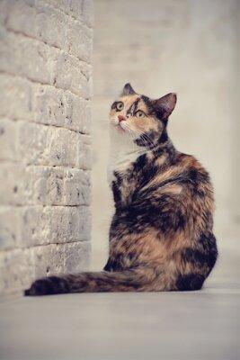 Affisch Flerfärgad katt nära en tegel ljus vägg