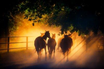 Affisch flock hästar