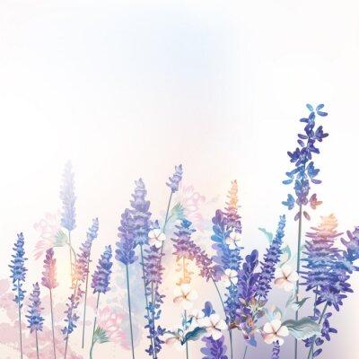 Affisch Floral vector spring illustration with field flowers lavender, morning light