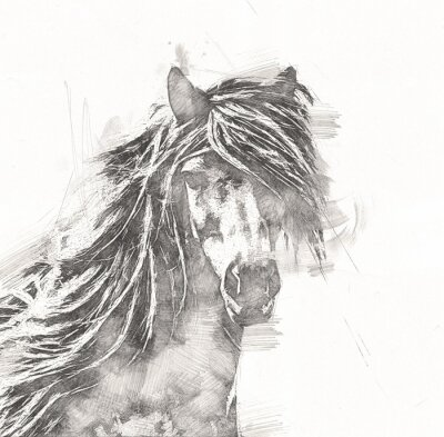 Affisch freehand horse head pencil drawing