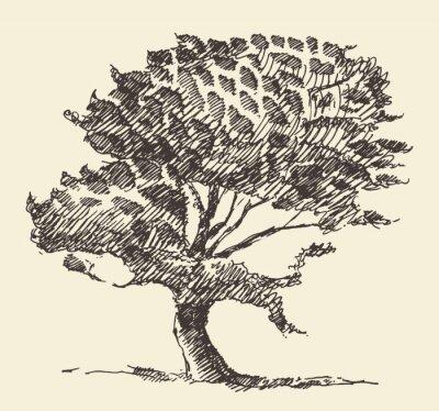 Affisch Gamla träd vintageillustration räcker utdraget skissar