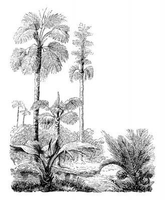 Affisch Gebang and Nipa Palm Trees vintage illustration.