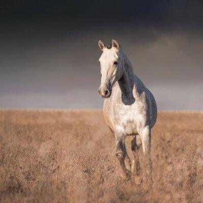 Affisch Grå häst run