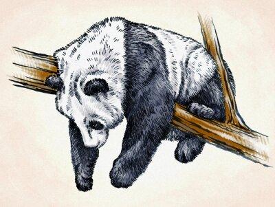 Affisch gravera bläck draw panda illustration