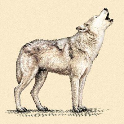 Affisch gravera wolf illustration