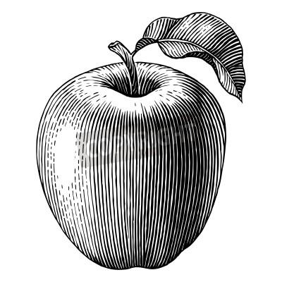 Affisch Graverad illustration av ett äpple vektor