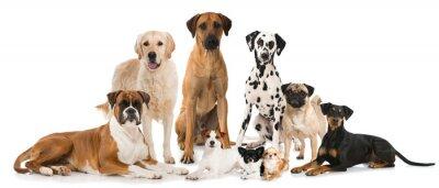 Affisch Gruppe verschiedener Hunde - Grupp av hundar