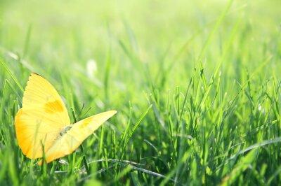 Affisch Gul fjäril i grönt gräs Bakgrund