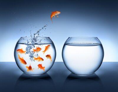 Affisch guldfisk hoppning - förbättring och karriär koncept