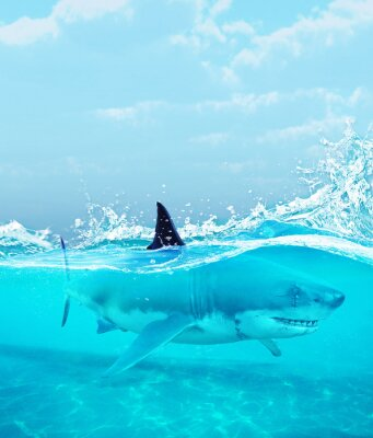 Affisch Haj under vatten, illustration 3d