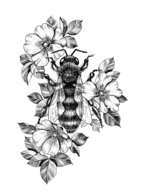 Affisch Hand Drawn Monochrome Bee among  Dog Rose Flowers