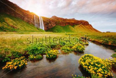 Affisch Härlig utsikt över blommande grönt veck i solljus. Dramatisk och vacker scen. Populär turistattraktion. Plats plats kända Seljalandsfoss Vattenfall, Island, Europa. Upptäck skönhetsvärlden.