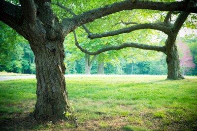Affisch Härliga sommar träd och gräs i parkmiljö
