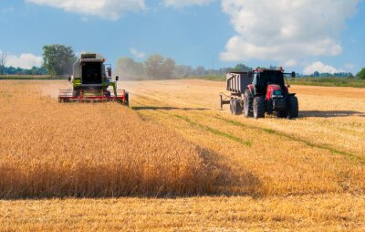Affisch Harvester kombinera och traktor skörd vete solig sommardag