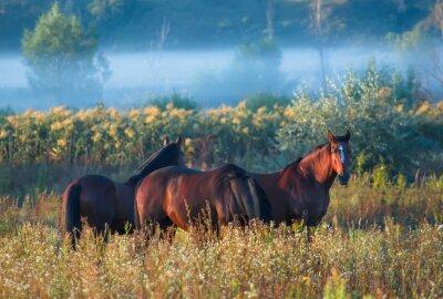 Affisch häst