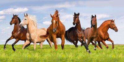 Affisch Häst flock springa i vacker grön äng